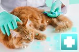 Small cute red cat examined at the veterinary doctor, close-up
