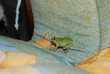 in the country house a small green frog climbed onto the bed.