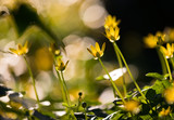little Yellow flowers blooming in a forest during spring time