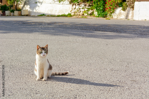 The cat sits on the street and basks in the sun. Crete, Greece
