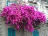 Balcone fiorito pieno di fiori e piante. Sud Europa