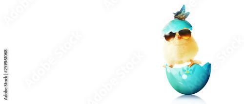 Ostern Küken Motiv - 259961068
