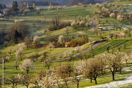 Frühling im Schwarzbubenland - 260006867