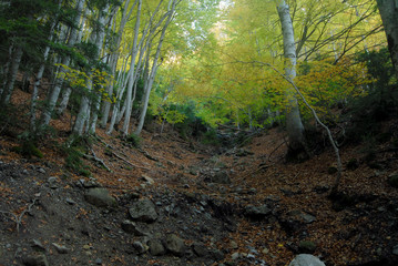 Landscapes of Ordesa in Autumn. Spain
