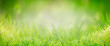 Leinwanddruck Bild - Green grass background, banner. Summer or spring nature. Sunny day