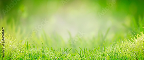 Leinwanddruck Bild Green grass background, banner. Summer or spring nature. Sunny day
