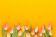 Yellow pastels color tulips on yellow background.