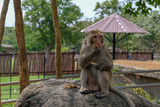 monkey sit on the rock in zoo and eat pea