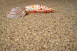 Ocean shell on large quartz sand. Background, wallpaper, template, layout. - 260055467