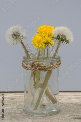 pissenlit jaune et fané, concept du printemps - 260058633