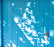 Shadows of summer leaves on a blue wooden background