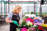 Frau bei der Gartenarbeit - 260081886