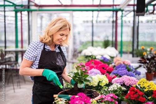 canvas print picture Frau bei der Gartenarbeit
