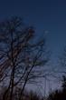 canvas print picture - Venus hinter Laubbaum im Winter