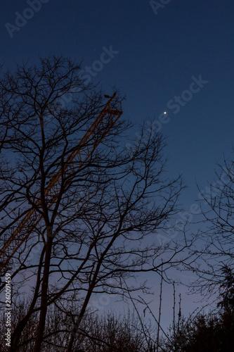 canvas print picture Venus hinter Laubbaum im Winter