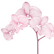 Hand-drawing floral background with flower orchid. Element for design. Vector illustration.