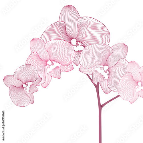 Hand-drawing floral background with flower orchid. Element for design. Vector illustration. - 260100446