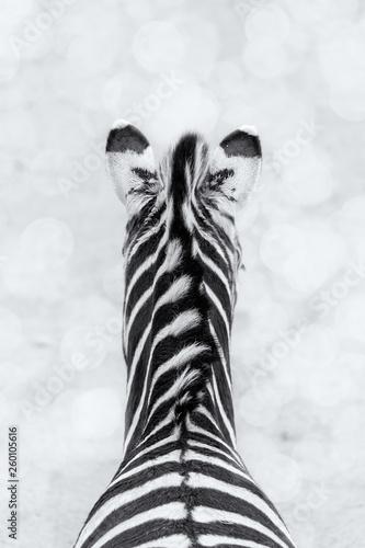 Zebras back view with white Bokeh  - 260105616