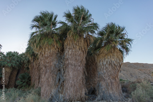 Palm trees in cafornia