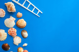 Summer concept with seashells and and toy ladder on blue background. Top view, flat lay. - 260143272