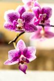 Mini orquídeas