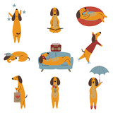 Collection of Purebred Brown Dachshund Dog, Friendly Funny Playful Pet Animals Cartoon Characters in Different Situations Vector Illustration