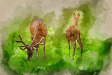 Watercolour painting of Beautiful red deer stag and doe in bright Summer sunlight grazing in field