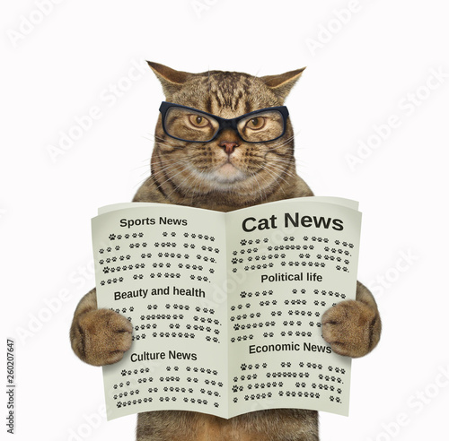 The cat in glasses is reading the newspaper. White background. Isolated.