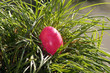 canvas print picture - Buntes Osterei auf der grünen Wiese