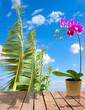Orchidée sur estrade bois, arrière-plan ravenale