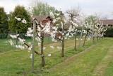 Blühende Apfelbäume in einem Kleingarten in Esslingen