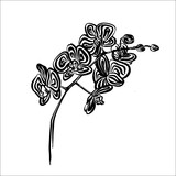 Hand drawn orchid outline sketch. Vector black ink drawing flower isolated on white background. Graphic illustration.