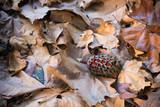 Magnolia seeds on leaves in autumn
