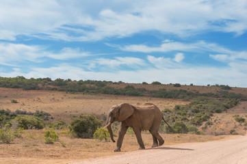 Wild elepant bull in African savannah landscape
