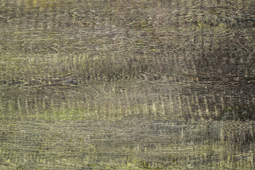 wooden background of green color with the expressed texture of a tree