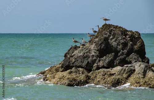 Les oiseaux Thailande © Pierrick