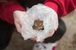 hands holding frog in plastic bag