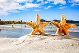 Summer photo of shell on beach and sea landscape  - 260343880