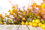 Fresh lemon fruits and blurred background of tree