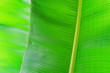 Leinwandbild Motiv Macro shot of green palm leaf streak structure surface, texture image with selective focus. Exotic palm tree plant leaves. Pollution free nature symbol. Background, copy space, close up.
