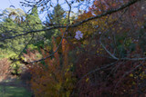 Fototapeta Fototapety na ścianę - autumn in the forest © Mariia