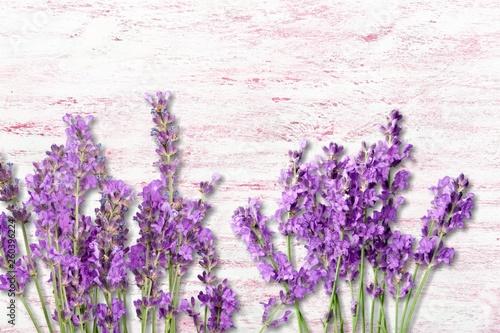 Lavender. - 260396224