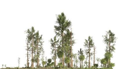 Forest of the mesozoic era isolated on white background 3D illustration