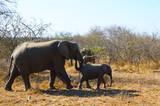 Mom and baby elephant on African safari