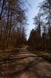 canvas print picture - Waldweg bei schönem Wetter im Herbst