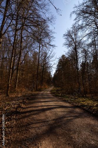 canvas print picture Waldweg bei schönem Wetter im Herbst