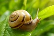 Leinwandbild Motiv snail on a green leaf in the bright rays of the sun on a blurred  background.environment and wildlife concept.garden snail eating a green leaf on a tree