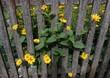 Leinwanddruck Bild - blumenblüte
