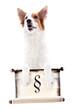 Leinwandbild Motiv Hund hält eine Schriftrolle mit dem Paragraphen Zeichen, freigestellt vor Weiß