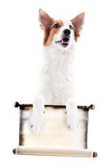 Hund hält eine Schriftrolle mit Textfreiraum, freigestellt vor Weiß © M.Dörr & M.Frommherz